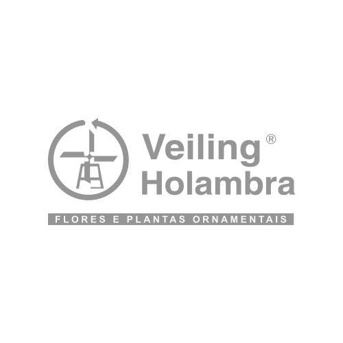 Veiling Holambra
